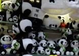 Iedereen had het erover, ze waren al BN'ers voor ze maar een poot op Nederlandse bodem hadden gezet. Er was jaren lobbyen en een bezoekje van onze koning en koningin voor nodig om het voor elkaar te krijgen, maar nu zijn ze er dan: de twee panda's van Ouwehands Dierenpark.