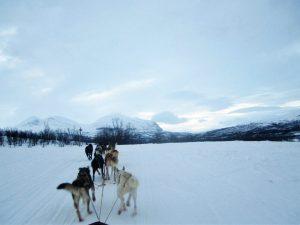 Studeren in het buitenland sledehonden