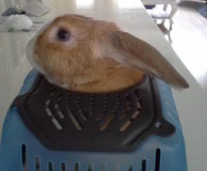 Met konijn op kamers