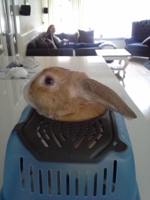 konijn huisdier nieuws